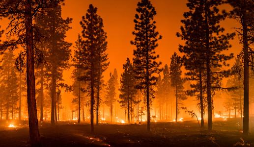 As queimadas causam prejuízos ao meio ambiente e à saúde.