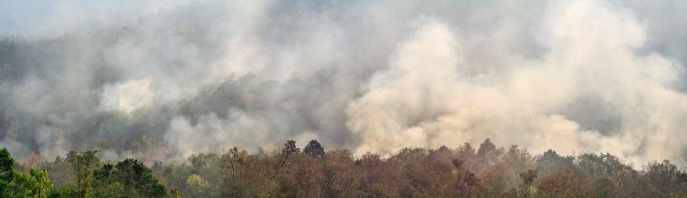 A Amazônia tem sido o bioma mais afetado pelas queimadas no Brasil.