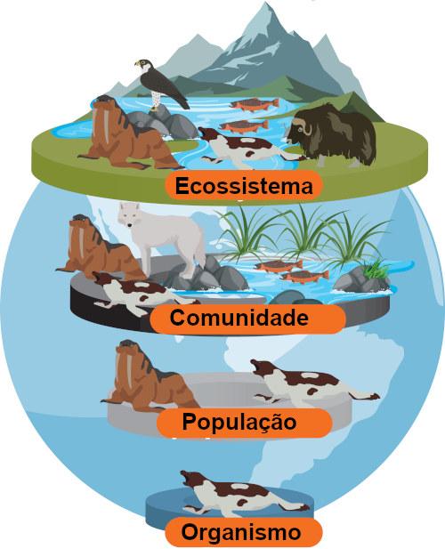 Um conjunto de indivíduos de uma mesma espécie forma uma população; um conjunto de populações, uma comunidade.
