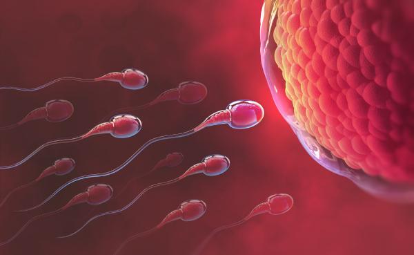 Quando há o encontro de gametas, a reprodução é do tipo sexuada.