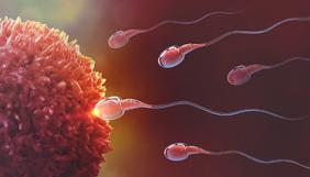 espermatozoides de encontro ao ovário