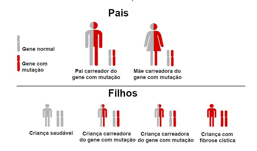 Esquema ilustrativo sobre como a fibrose cística é herdada.