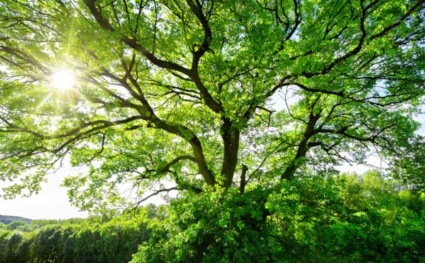 O dia da árvore é comemorado no 21 de setembro.