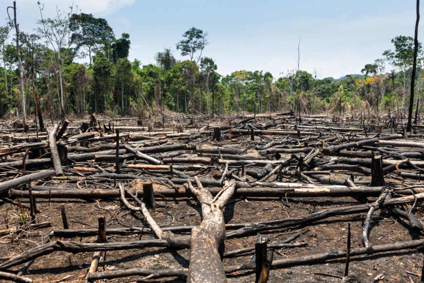 Troncos de árvores arrancadas pelo desmatamento.