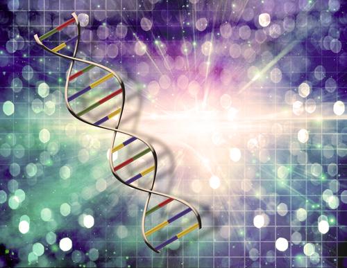 É no DNA que encontramos a informação genética de cada organismo