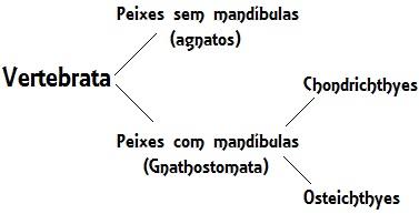 Os peixes podem ser divididos em: agnatos, condrictes e osteíctes