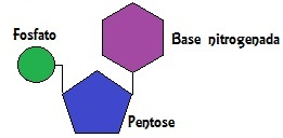 Observe a estrutura de um nucleotídeo