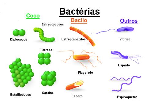 As Bactérias apresentam diferentes formas, algumas vivem isoladas e outras, em colônias