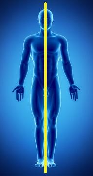 O homem apresenta simetria bilateral. Percebe-se, portanto, que há apenas um plano capaz de dividir o corpo em metades semelhantes