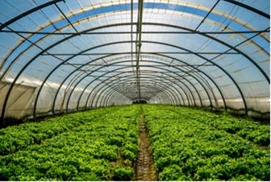 Exemplo de estufa usada para cultivar plantas