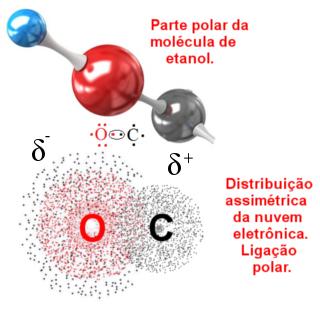 Ligação covalente polar entre átomos de carbono e oxigênio