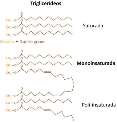 Estrutura dos triglicerídeos saturados (gorduras), monoinsaturados e poli-insaturados (óleos)