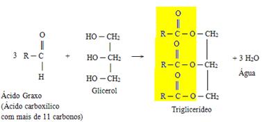 Reação genérica de formação do triglicerídeo a partir de três ácidos graxos e uma glicerina
