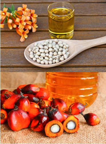 Óleos de soja e dendê usados na produção de biodiesel