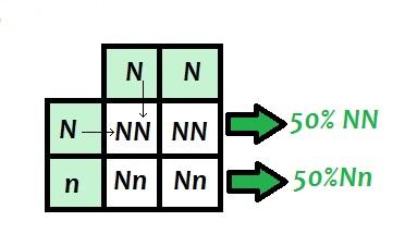 Observe as possíveis combinações para a formação dos descendentes