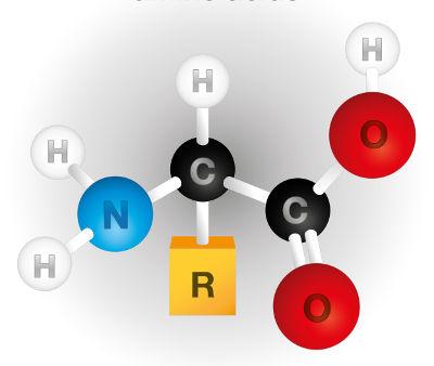 O radical diferencia um aminoácido de outro