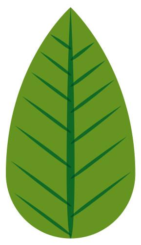 Folha oval apresenta a base mais larga que o ápice