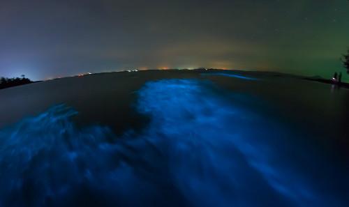 Algas dinoflageladas liberam fótons de luz, deixando a maré iluminada