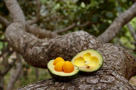 O pequi é um fruto do Cerrado muito utilizado na culinária regional