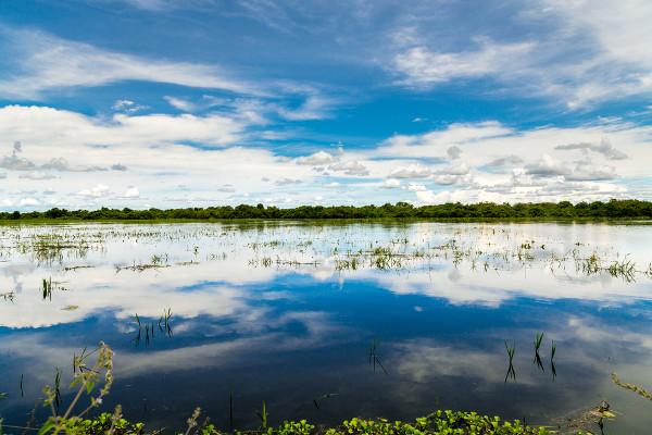 O Pantanal é a maior área alagada do mundo e possui dois terços de sua área cobertos por água durante as chuvas abundantes