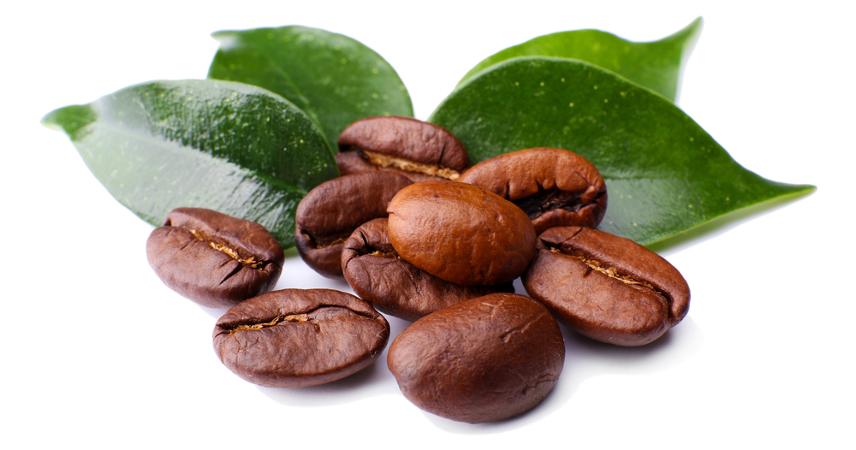 Podemos destacar como característica de eudicotiledôneas a presença de dois cotilédones, como no café