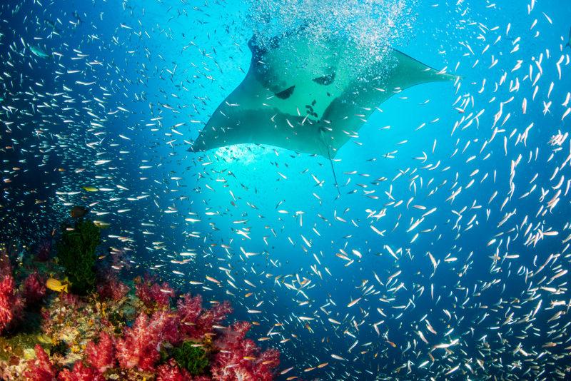 O aquecimento global pode causar o branqueamento de corais, que pode levar esses organismos à morte, prejudicando, assim, a grande biodiversidade desses ecossistemas.