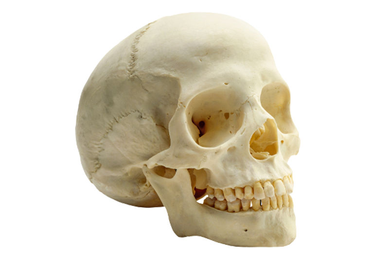 Os ossos do crânio garantem a proteção do encéfalo.