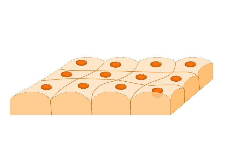 Tecido com células próximas umas das outras e com pouca matriz extracelular.