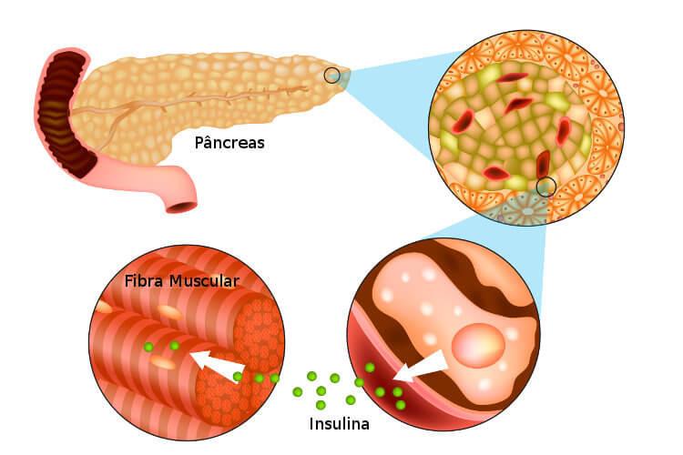 O aumento dos níveis de glicose no sangue leva a uma liberação de insulina, que atua na redução desses níveis.