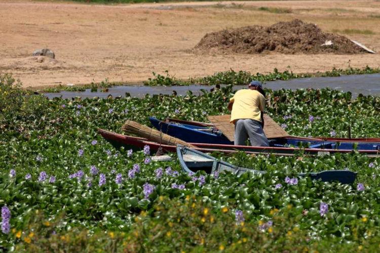 Muitas famílias vivem da pesca e da agricultura proporcionadas pelo Rio São Francisco.