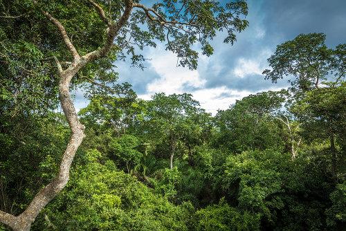 A Amazônia é um importante bioma brasileiro e apresenta uma grande variedade de espécies