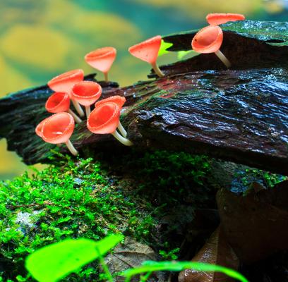 A biodiversidade diz respeito à variedade de organismos vivos ao nosso redor