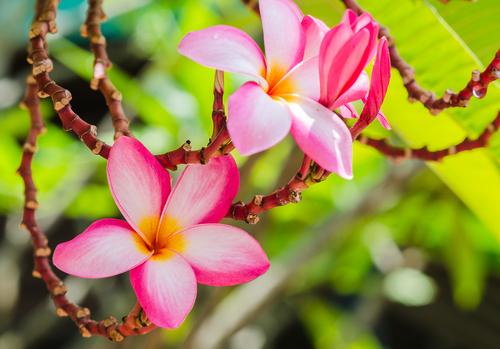 A Botânica é a parte da Biologia responsável pelo estudo das plantas