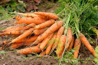 A cenoura é um exemplo de alimento rico em vitamina A