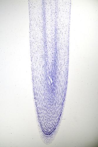 A coifa tem como função proteger o sistema meristemático da abrasão com o solo