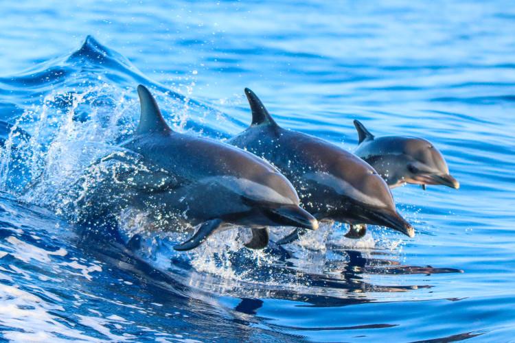 A ecolocalização permite aos golfinhos identificarem a localização dos outros membros do grupo