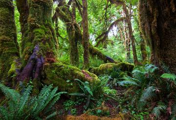 A ecologia é a ciência que estuda a relação entre os seres vivos entre si e com o meio ambiente