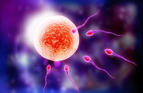 A fecundação é o processo em que o espermatozoide consegue fertilizar o óvulo