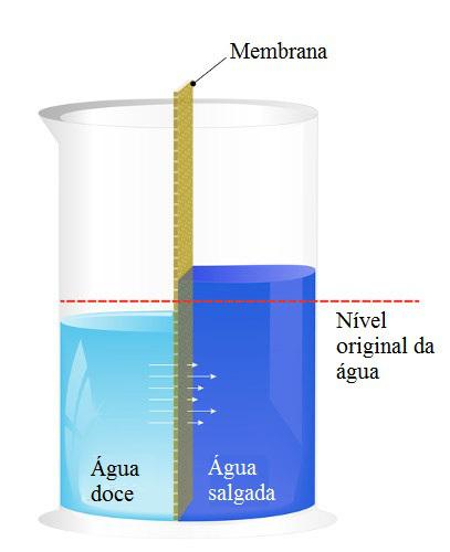 A osmose é o movimento da água do meio menos concentrado para o mais concentrado
