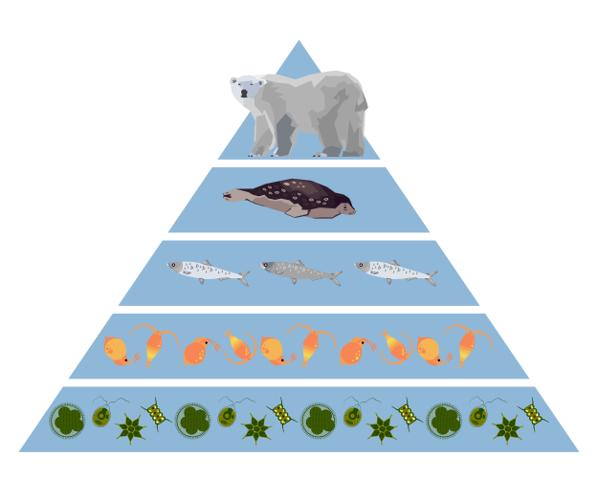 A pirâmide de energia nunca é representada de forma invertida