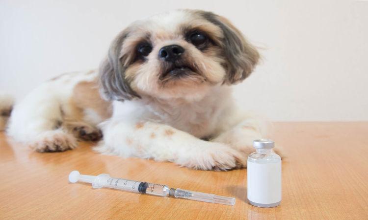 A vacinação dos animais domésticos é uma forma de prevenção pré-exposição