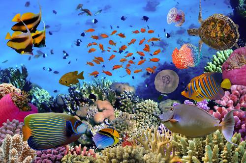 A vida marinha nos recifes de corais, uma colônia homeomórfica