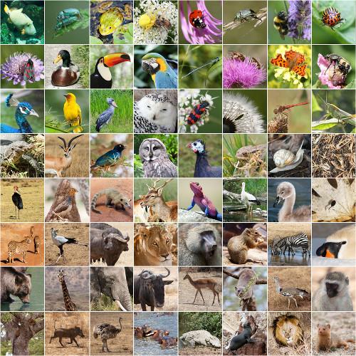 Alguns exemplos de seres vivos