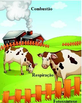 Animais e plantas participam ativamente do ciclo do oxigênio