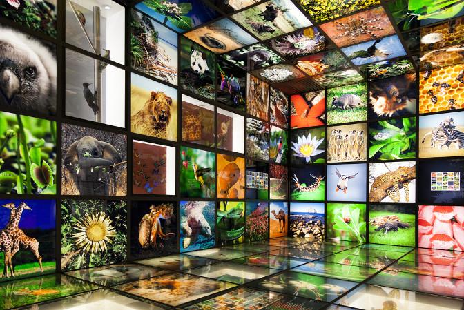 Ao classificar os seres vivos, conhecemos melhor a distribuição das espécies no planeta