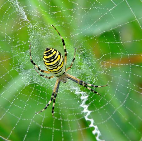 As aranhas são exemplos de aracnídeos