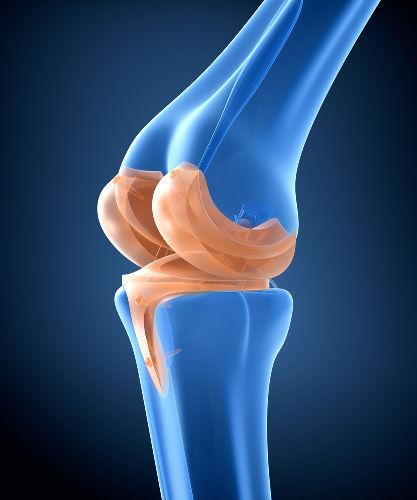 As articulações garantem a movimentação e a união dos ossos
