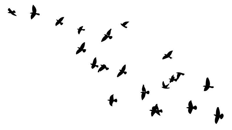 As aves apresentam diversas adaptações ao voo, como a presença de ossos pneumáticos