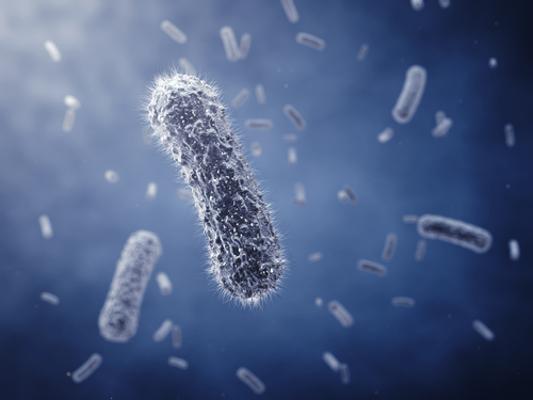 As bactérias apresentam diversos formatos