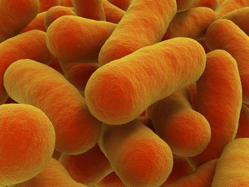 As bactérias podem desenvolver mecanismos de resistência